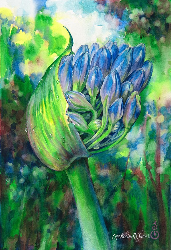 """Anticipation, Agapanthus"" original fine art by Catherine M. James"