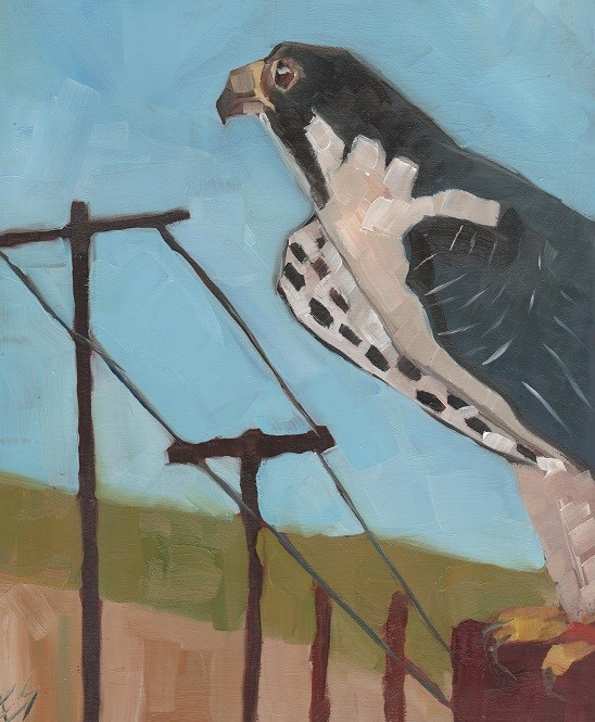 """Falcon"" original fine art by Elizabeth See"