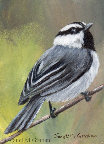 """Mountain Chickadee ACEO"" original fine art by Janet Graham"