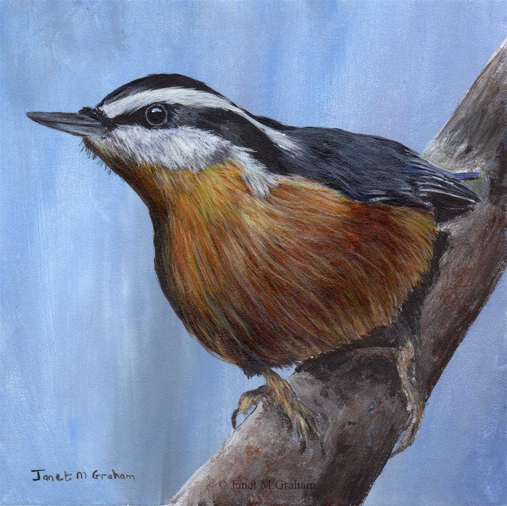 """Red Breasted Nuthatch"" original fine art by Janet Graham"