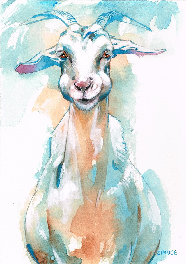 """No. 13 Goat"" original fine art by Annabel Chance"