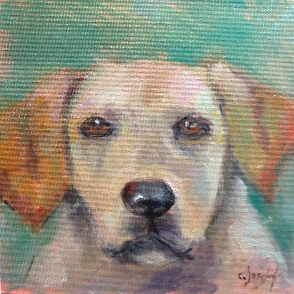 """Yellow Lab"" original fine art by Carol Josefiak"