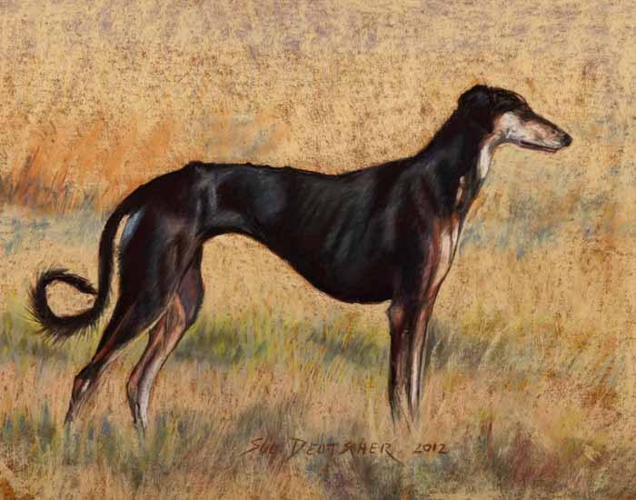 """""""Reta, Saluki from Hawks View Hounds"""" original fine art by Sue Deutscher"""