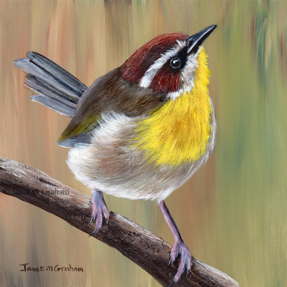 """Rufous Capped Warbler"" original fine art by Janet Graham"