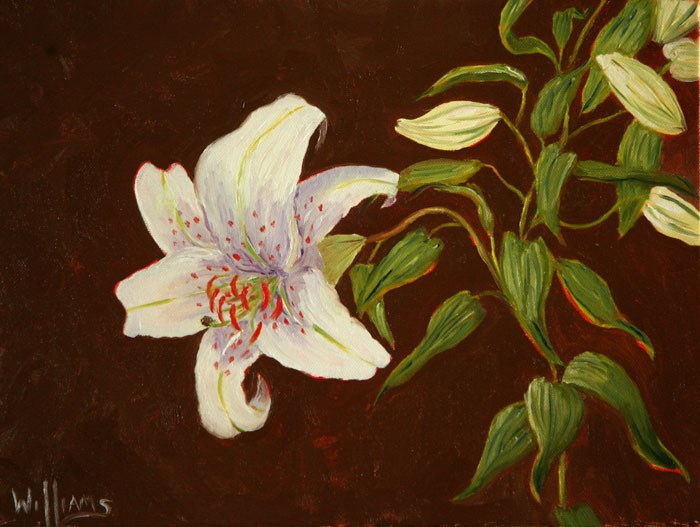 """Lily"" original fine art by Sunny Williams"