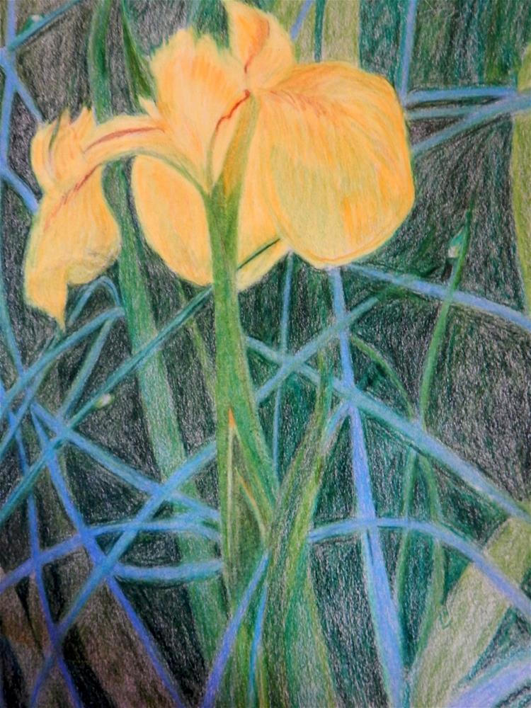"""Wild Yellow Iris"" original fine art by Elaine Shortall"