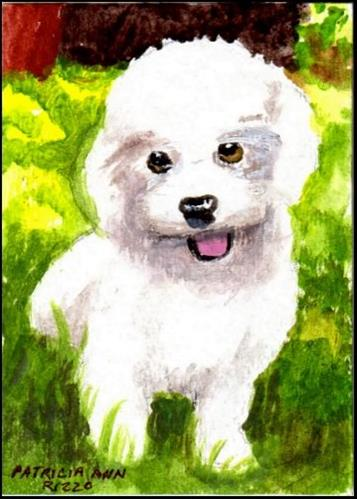 """Small White Puppy"" original fine art by Patricia Ann Rizzo"