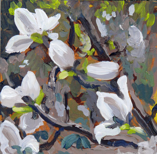 """Magnolia Blossoms"" original fine art by Darlene Young"