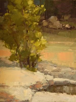 """Sycamore at the Springs"" original fine art by Laurel Daniel"