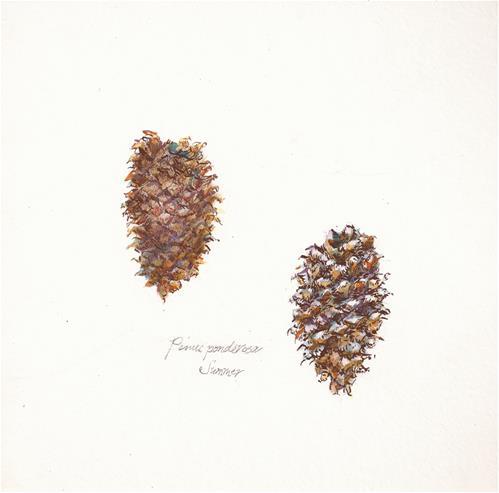 """Pinus ponderosa - Summer"" original fine art by Jean Krueger"