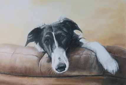 """Borzoi"" original fine art by Charlotte Yealey"