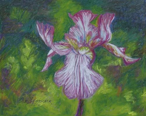 """iris"" original fine art by Sue Deutscher"