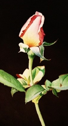 """Pink Rose Bud"" original fine art by Jacqueline Gnott, whs"