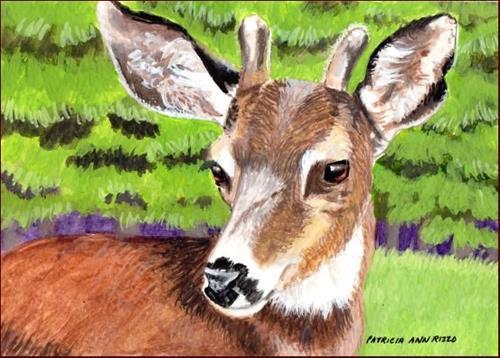 """Little Deer"" original fine art by Patricia Ann Rizzo"