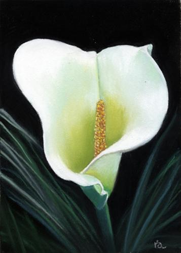 """""""Calla lily"""" original fine art by Ria Hills"""