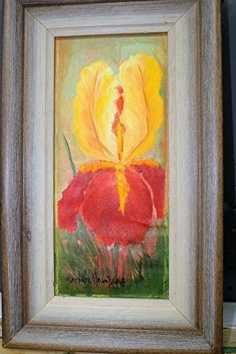 """Yellow Red Iris"" original fine art by Barbara Haviland"