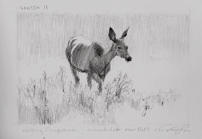 """Sketch 11__Walking Companion__deer sketch"" original fine art by V.... Vaughan"