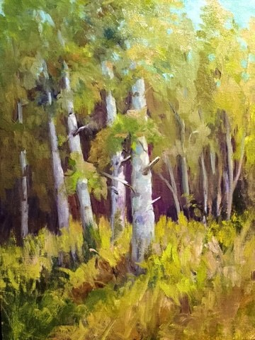 """Birch at Hyland"" original fine art by Judith Anderson"
