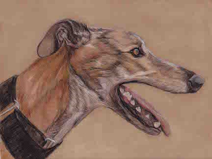 """Greyhound"" original fine art by Charlotte Yealey"