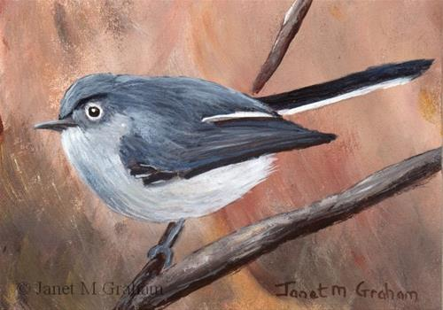 """Blue Grey Gnatcatcher ACEO"" original fine art by Janet Graham"