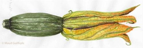 """Squash blossoms in season now, beautiful to paint!"" original fine art by Maud Guilfoyle"