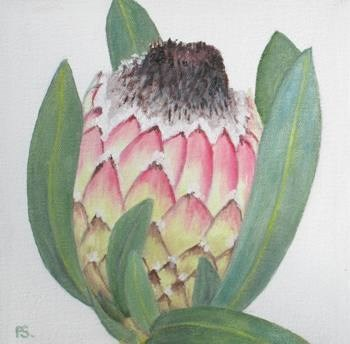 """Protea III"" original fine art by Pera Schillings"