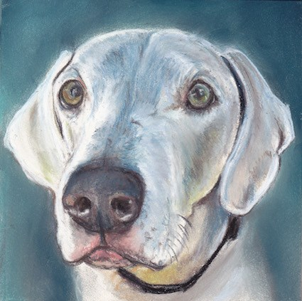 """Weimaraner"" original fine art by Charlotte Yealey"