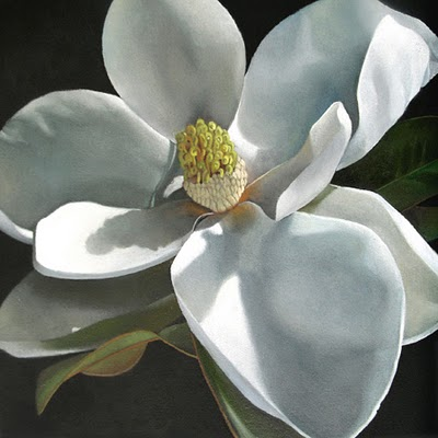 """Magnolia No 2  6x6"" original fine art by M Collier"