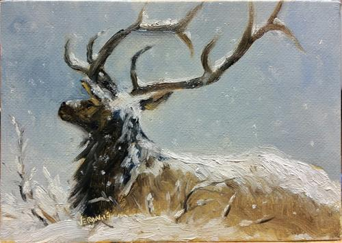 """Elk in snow-study"" original fine art by Veronica Brown"
