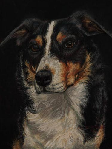 """Border Collie"" original fine art by Sue Deutscher"