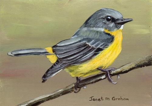 """Eastern Yellow Robin ACEO"" original fine art by Janet Graham"