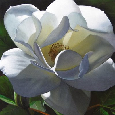 """Rose No. 2 6x6"" original fine art by M Collier"
