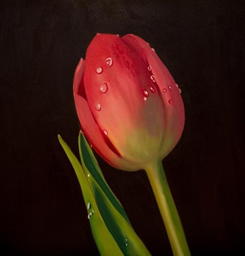 """Tulip Dew Drops #2"" original fine art by Lauren Pretorius"