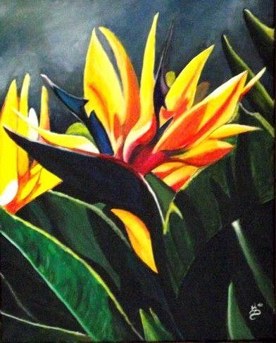 """Bird of Paradise"" original fine art by Kim Selig"