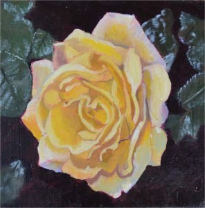 """White Rose"" original fine art by Robert Frankis"