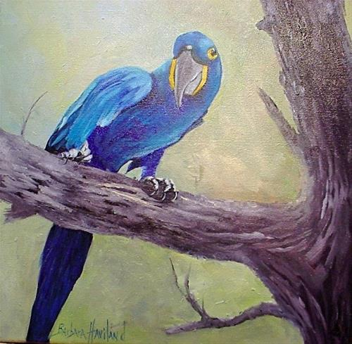 """Hyacinth Macaw   Bird,feathers oil painting"" original fine art by Barbara Haviland"