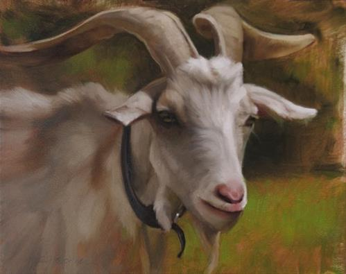 """Goat It's a painting of a goat!"" original fine art by Diane Hoeptner"